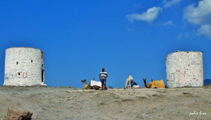 Camels & Windmills