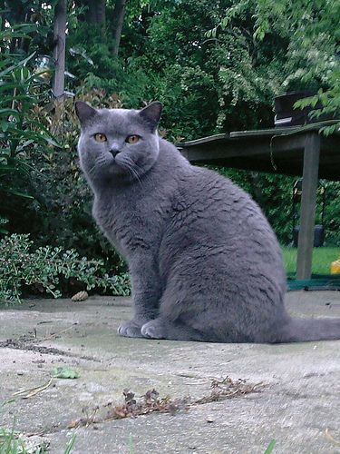 Top Cat, Ilkley, West Yorkshire [2008] - Mr Sherbs