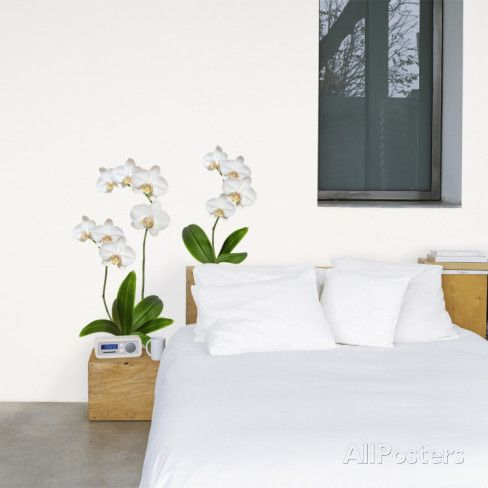 White Orchid Wall Decal - at AllPosters.com.au