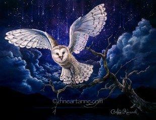 Falling Stars and Barn Owl