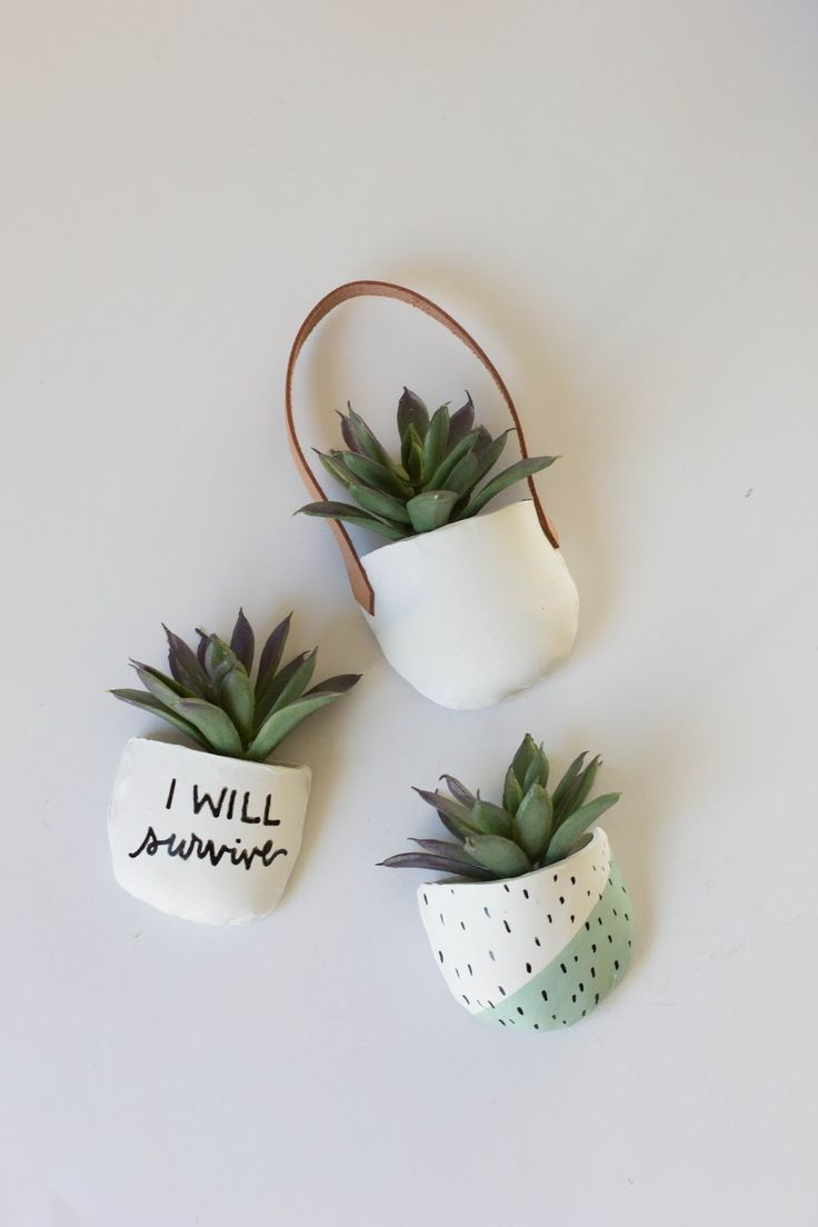 Potted Succulent Magnets