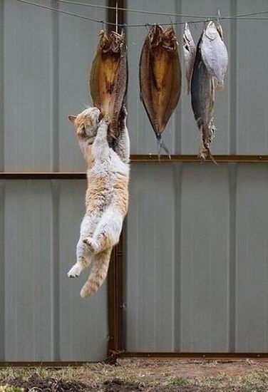 Catch of the day