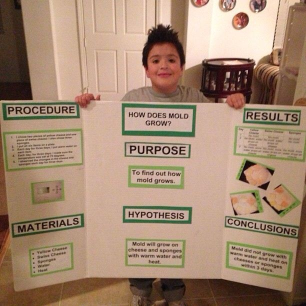 Th Grade Science Fair Projects Mold on science fair projects results sample, science fair projects that are easy, science fair projects 5th, science fair projects girly-girl, science fair projects fish, science fair for 4th grade, good science fair projects 6th grade, science fair projects kindergarten, science fair projects health, crystal science projects 5th grade, science fair projects 10th grade, science fair projects 9th grade, science fair projects 1st, cool science projects 5th grade, science project board layout, science fair projects for 12th graders, science projects for 4th graders examples, winning science fair projects 2nd grade, science fair projects about skittles, science fair projects preschool,