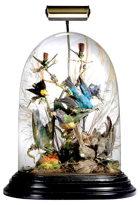 Large Antique Glass Dome of Victorian Exotic Birds « The Official Radio-Guy.Com Newsletter