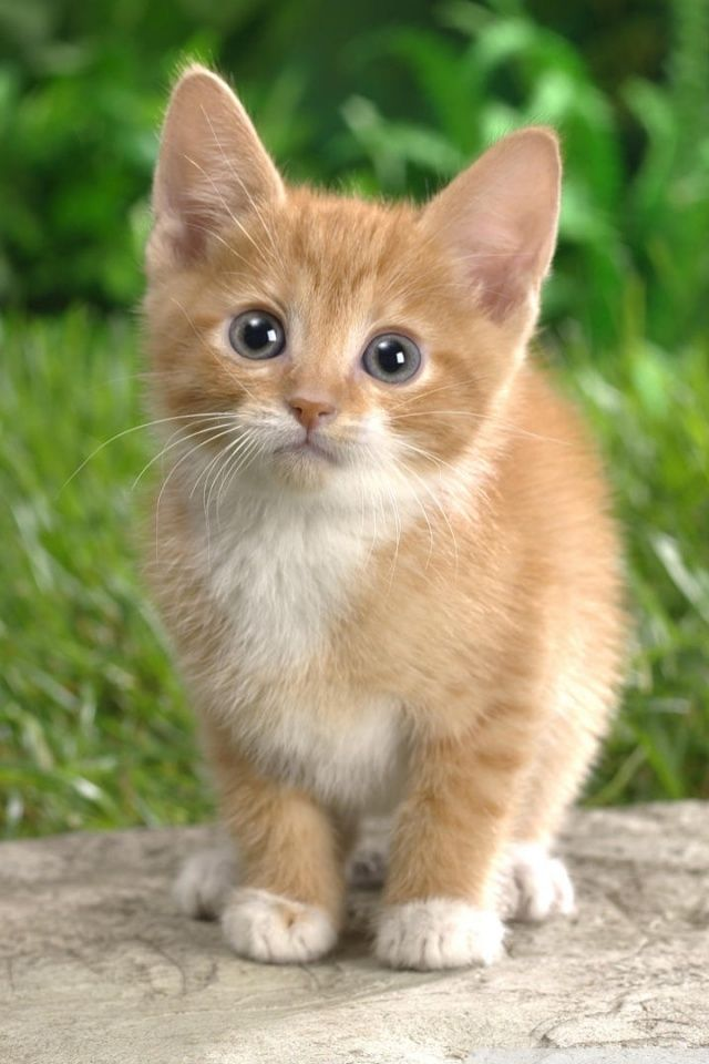 Kitten With Mittens Via Project Dna Orgtap The Link To Check Out Great Cat Products We Have For Your Litt Cute Cats Kittens Cutest Cute Cat Wallpaper