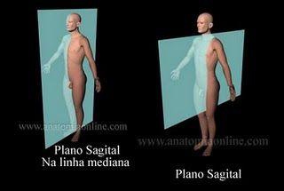 PLANO SAGITAL. Es perpendicular al suelo. Divide al cuerpo en dos mitades, derecho-izquierdo.