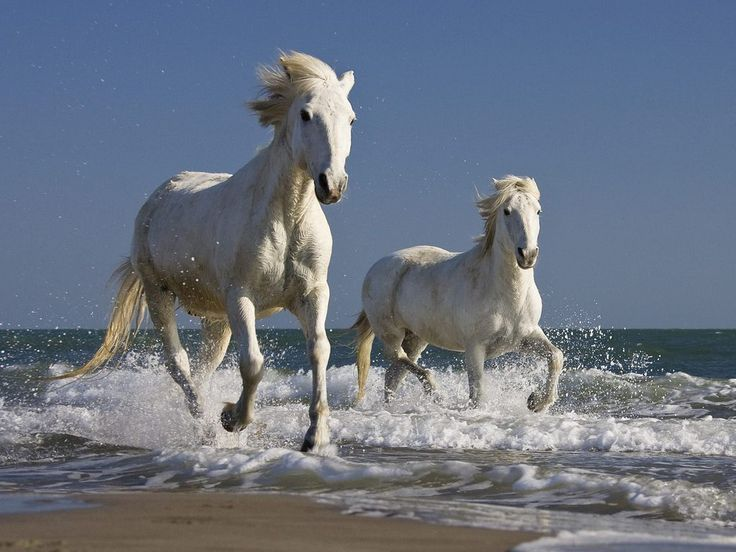 Horse Wallpapers HD Pictures - One HD Wallpaper Pictures ...