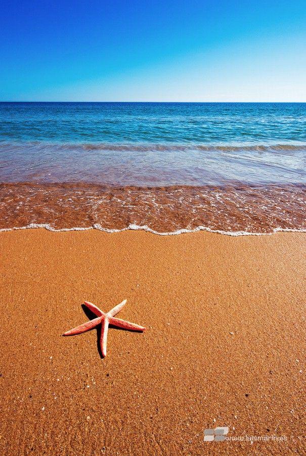 Photo Estrella de mar by Luis Marín on 500px