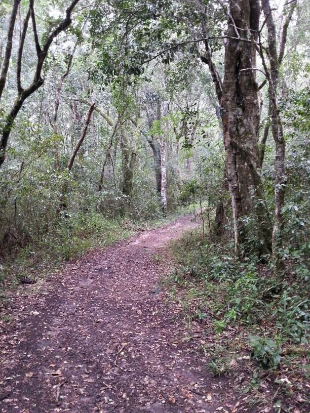 Drupkelder Forest Hike, start of  hiking trail near Rheenendal, Western Cape, R.S.A