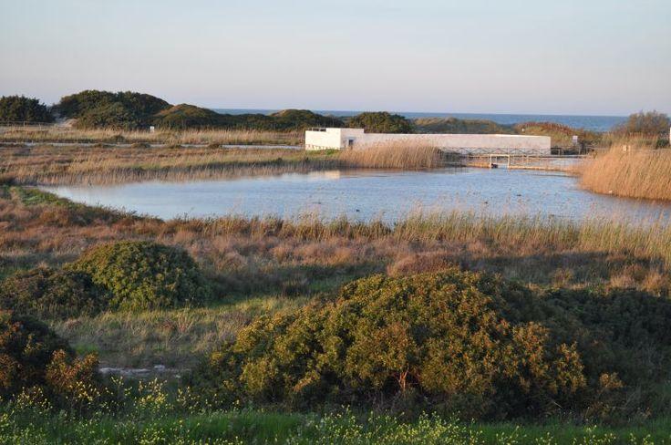 Fiume Morelli - Parco Naturale Regionale da Torre Canne e Torre S. Leonardo Ostuni Fasano
