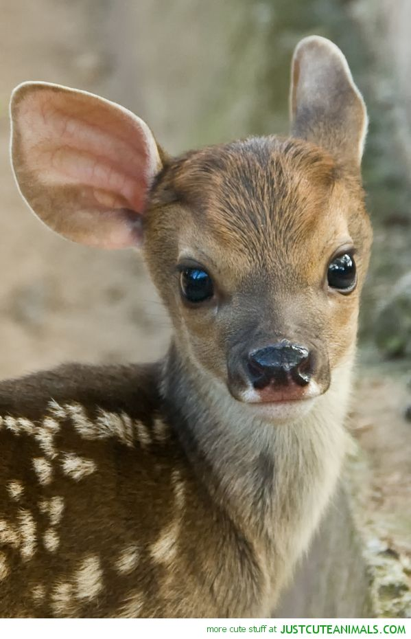 aranyos állatok vad vadon élő fajok a Föld bolygó természet képek Képek FOTÓK képek