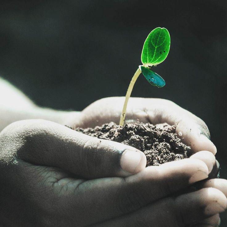 #gardening #eko #rośliny #wogrodzienajlepiej