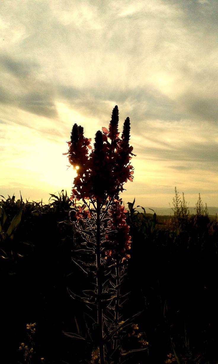 Naplemente. Sunset.