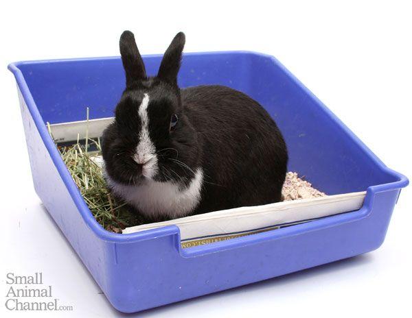 Conejo en su bandeja