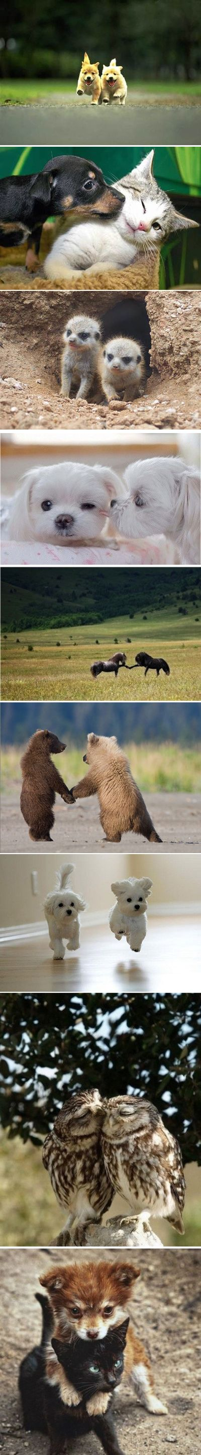 Funny pictures of the day -  Cute Baby Animals In Pairs (Compilation)