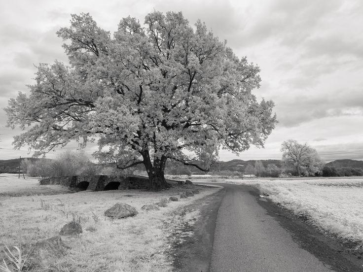 infrared tree - Radtour mit IR-Kamera