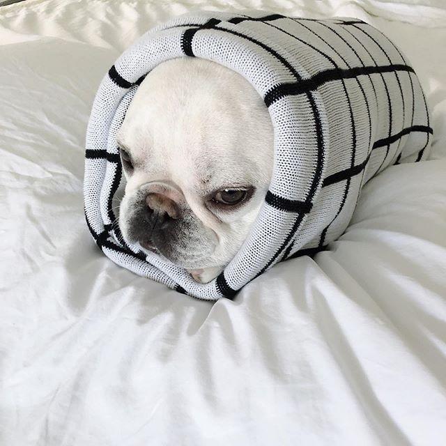 I Don T Like Thunderstorms French Bulldog Puppies French Bulldog Bulldog