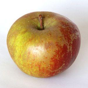 buy northern spy apples