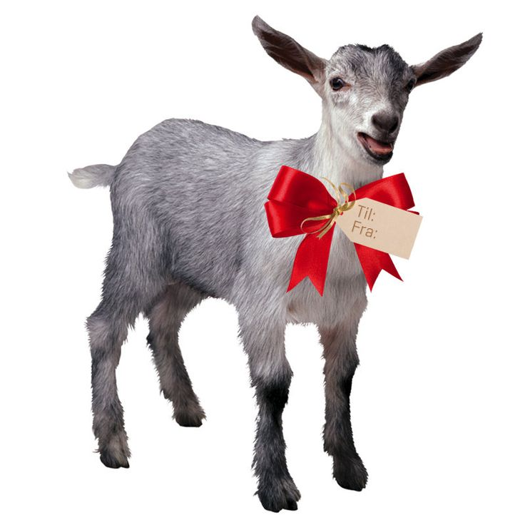 """Mit største og bedste ønske på denne ønskeseddel! :) En gave via Folkekirkens Nødhjælp. Fx en ged, et bistade, en køkkenhave, 10 høns og en hane eller en fodbold. Mange andre har hårdere brug for visse ting end jeg. Men jeg vil få meget stor glæde af sådan en """"gave"""". :-)"""