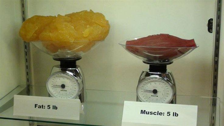 5 livres de graisse vs 5 livres de muscle