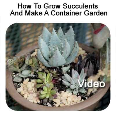 21 best images about plant care on pinterest san diego medicinal plants and india - How to make a succulent container garden ...