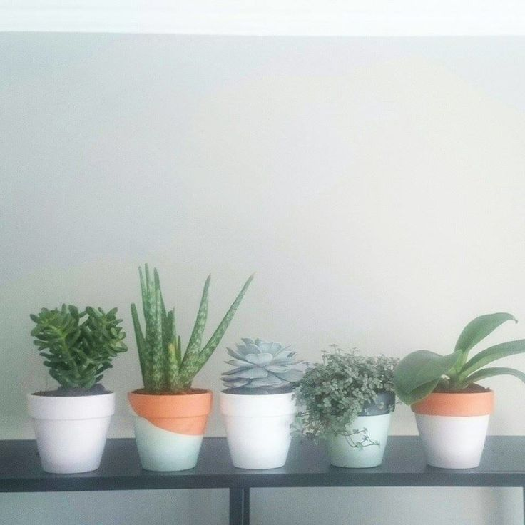 Painted terracotta pots for my precious succulents. DIY Upcycled