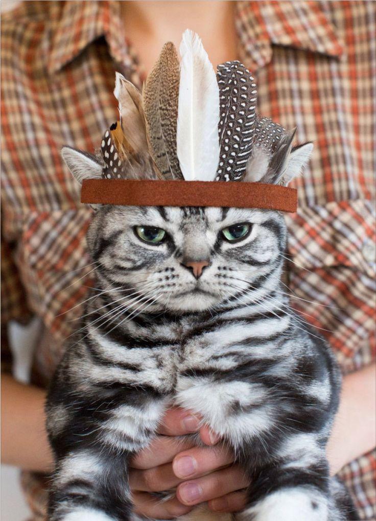 Best Photos of the Month, November 2014, Inspiration, Photography, Animals, Cats, Artnaz.com