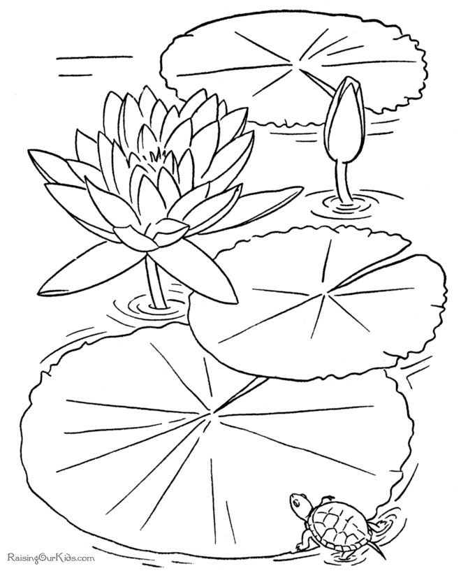 free color pages free printable flower coloring book page - My Color Book Printable