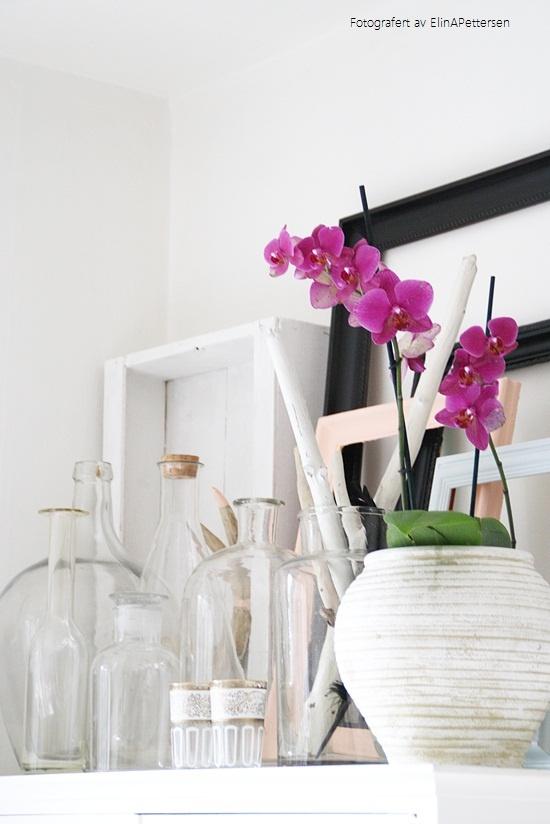 Eddas orchid