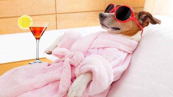 Mascotas VIP: cómo es el hotel boutique de Palermo Hollywood con trato especial para animales  Son recibidos como un huésped más y cuentan con servicios a medida: opciones de alimentos de balanceado, paseadores, pedicuría y manicuría canina, entre otros -VER MAS