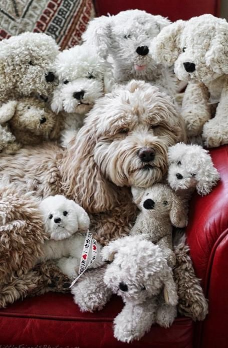 I can't say anything more than AWWWW!!!! Which one is the real dog? by Seth Casteel