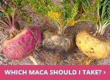 Black Maca Powder | Black Maca Capsules | Organic, Fair Trade, Fresh, GMO-Free | The Maca Team