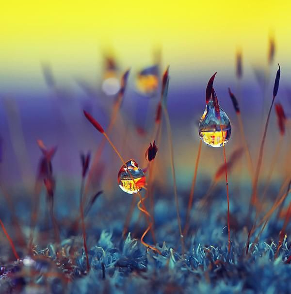 Dew Photography by Indonesia based photographer Diens Silver.