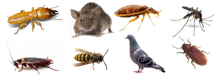 Ask us today for a free quote and be assured that you won't be surprised by any hidden charges. Make Green Pest Shield your companion and don't let pests ruin your life!