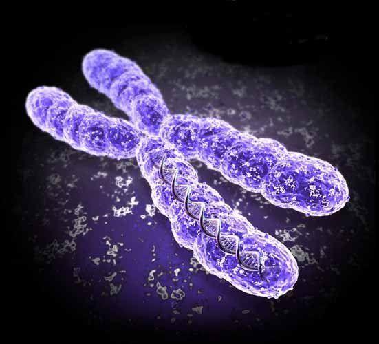Ereditarietà e ambiente: quando la genetica non è tutto