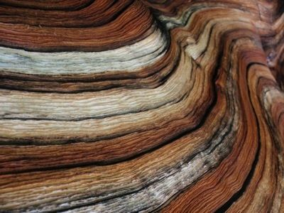 Which Wood Should I Use Hardwoods Vs Softwoods Natural