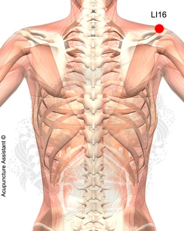 jian shu syracuse acupuncture benefits - photo#36