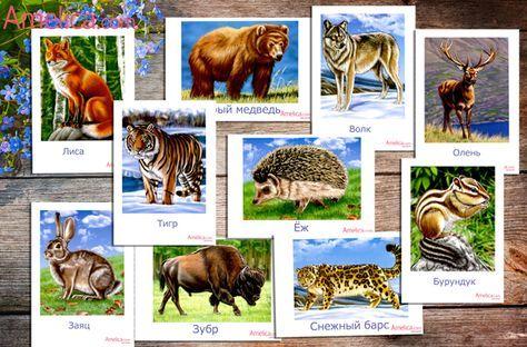 Дикие животные в картинках для детей, развивающие карточки для изучения животных дома и в детском саду скачать
