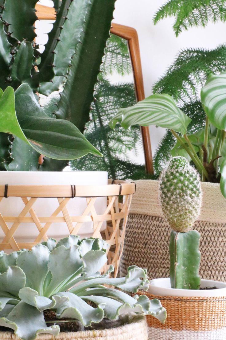 HARTwerck | groen inspiratie - verzamel planten bij elkaar in manden voor een hoekje groen bij je werkplek of in de wachthal van je praktijkruimte