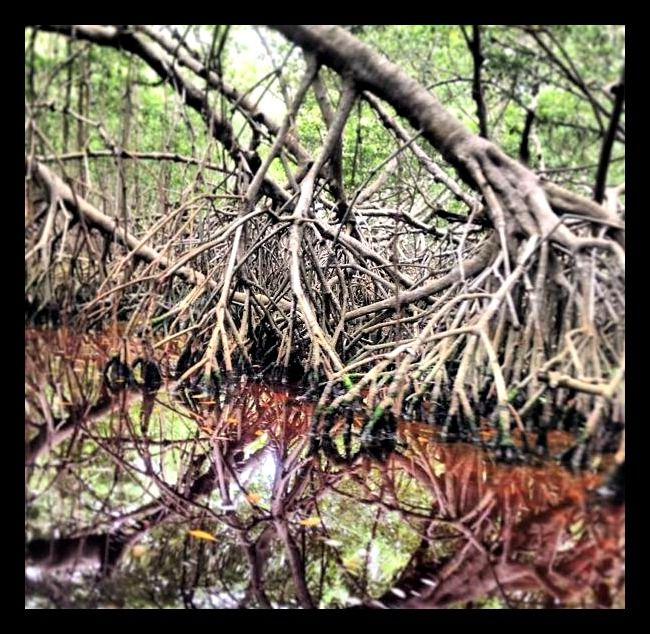 Ilusión Óptica: Ya que el reflejo del agua puede parecer continuo al objeto original, en este caso, las raíces.