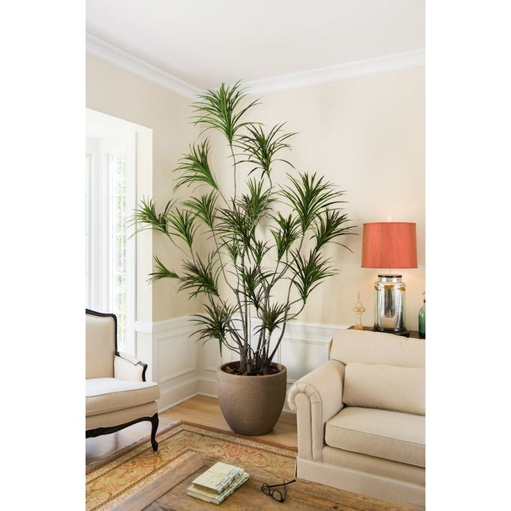 Dramatic Dracaena Tree to give your home a little taste of outside. New Growth Designs