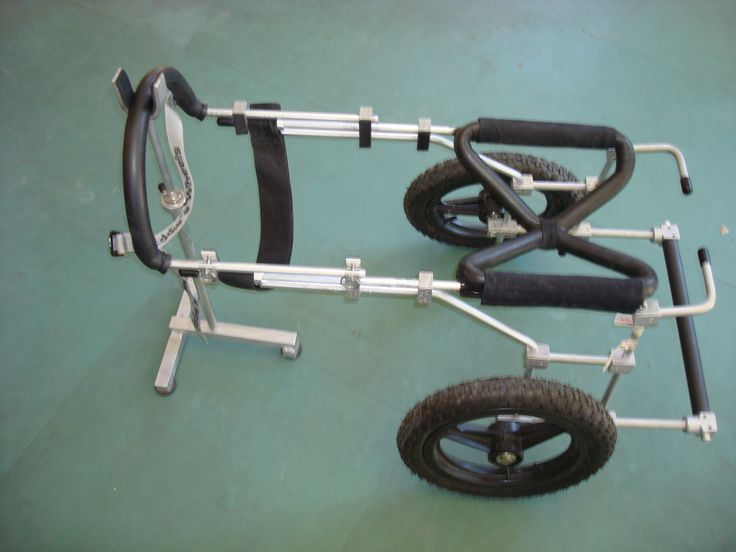 Canine cart for disabled dog with degenerative myelopathy