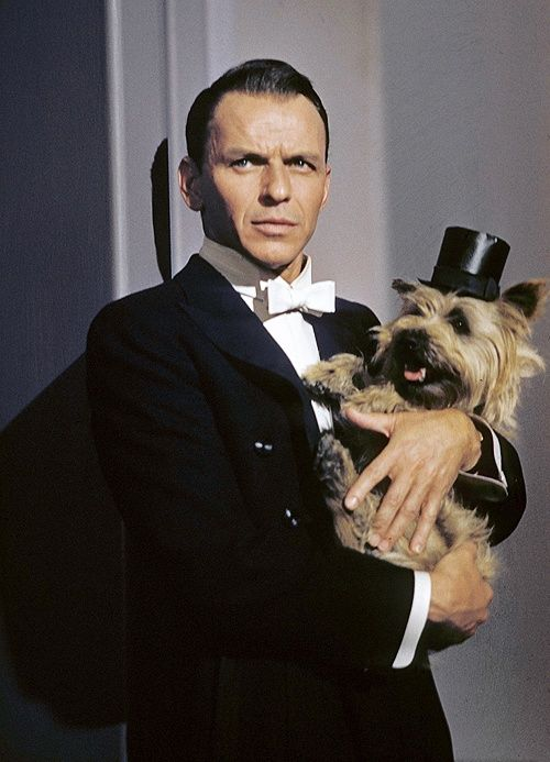 Two well-dressed Stars Frank Sinatra and Cairn Terrier.