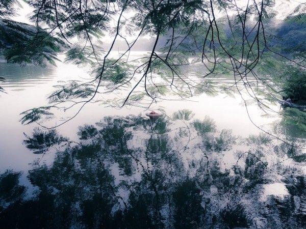 Misty Dreamwalk © Michal Luzzatto