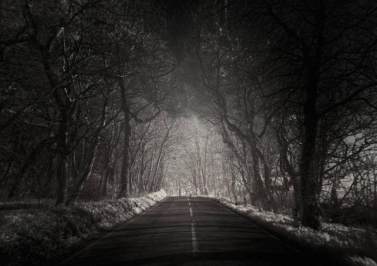 Mais uma floresta fantasmagórica fotografada. Andar aí a noite, nem pensar!