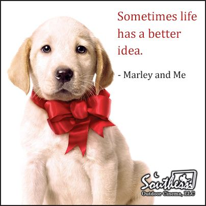 Movie Quote Marley And Me Movie Quotes Pinterest Movie