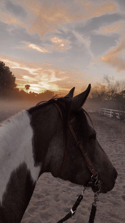 Horse Aesthetic Equine Equestrian Sunset Vsco