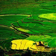 When i go to here, farmers have harvesting the rice ripe. This place is Sin Chai village belong Sapa Town, Lao Cai province. It seems that this year's rice crop ripening earlier than usual. Every year, I used to come here in September, October and after Tet of Vietnam. The scenery, the life, the people here are always inspired by the pictures of me