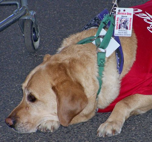 The IRS allows deductions for expenses of caring for a service dog. This includes all expenses from feeding and vet bills, to training and equipment.  http://www.irs.gov/publications/p502/ar02.html#en_US_publink1000178936