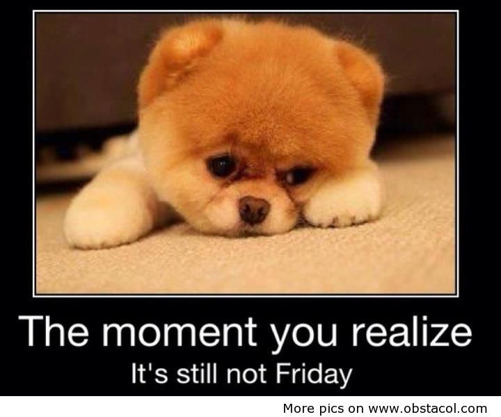 Funny Animal Quotes | Its still not Friday | Funny Pictures, Funny Images, Funny Quotes